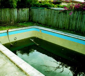 green algae in a swimming pool