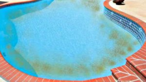 Remove And Prevent Swimming Pool Algae Pool For