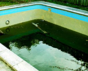Swimming pool algae pool for thoughtpool for thought - Black algae removal swimming pool ...